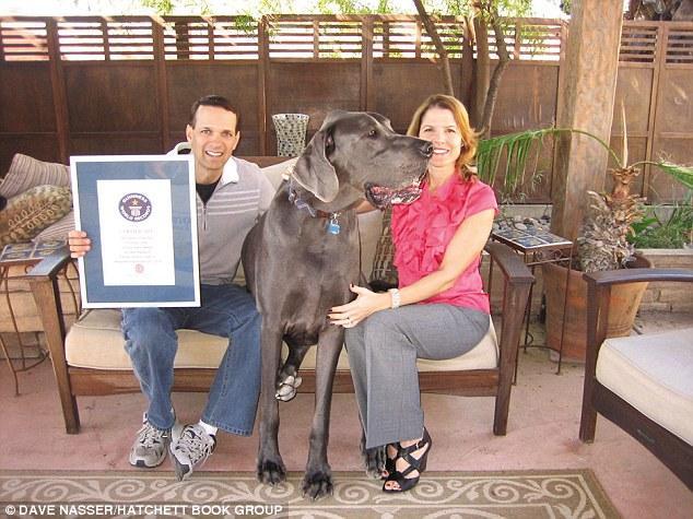 самая большая в мире собака 6 (634x475, 64Kb)