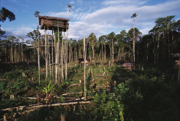 дом на дереве (2) (580x390, 45Kb)