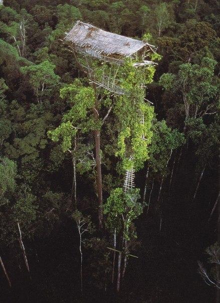 дом на дереве (439x604, 81Kb)