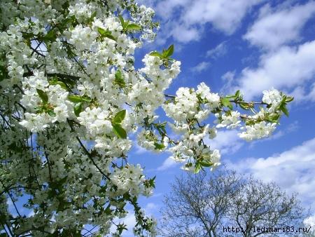 весна4 (450x338, 186Kb)
