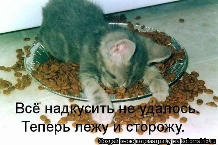 kotomatrix_03 (700x466, 61Kb)