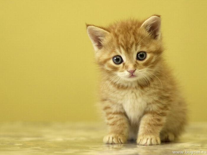 Funny-Cats-cats-9474201-1600-1200 (700x525, 246Kb)