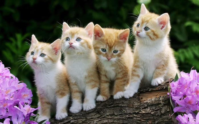 Kittens (700x437, 356Kb)
