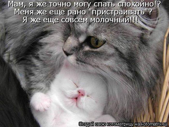 kotomatrix_01 (700x525, 76Kb)