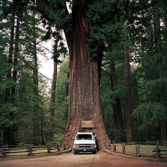 деревья (570x570, 225Kb)