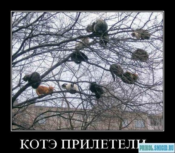 1329078295_Demotivatory_pro_KOTE_3 (580x506, 108Kb)