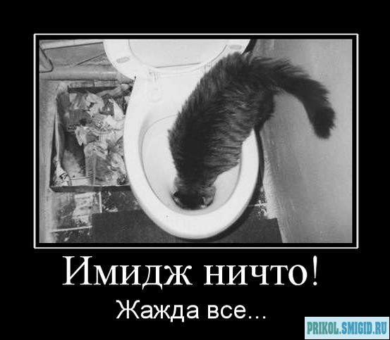 1329078300_Demotivatory_pro_KOTE_47 (553x483, 39Kb)
