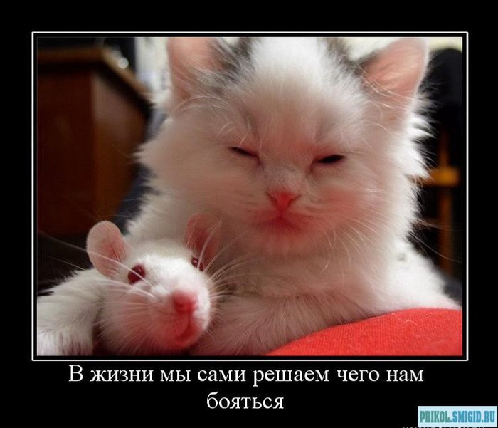 1329078301_Demotivatory_pro_KOTE_58 (700x601, 57Kb)