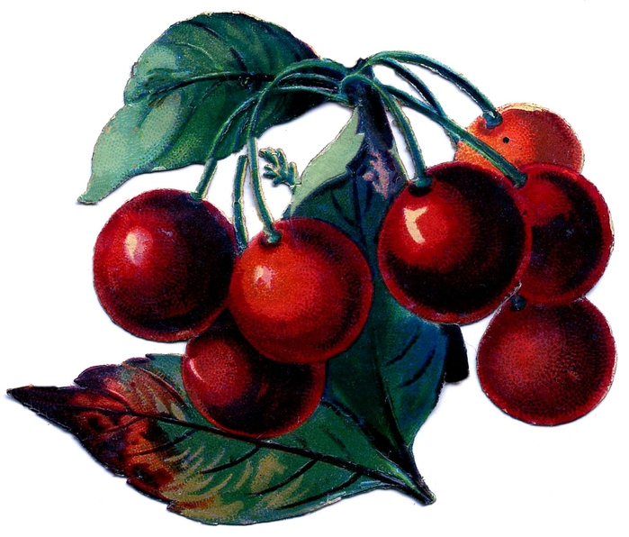 1ascrapcherries-graphicsfairy005 (700x596, 266Kb)