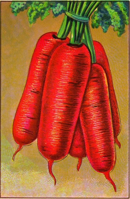 vegiscarrots-graphicsfairy009 (455x700, 331Kb)