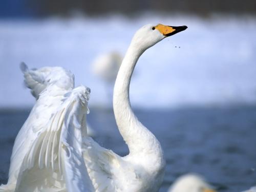 Чудесные птицы!