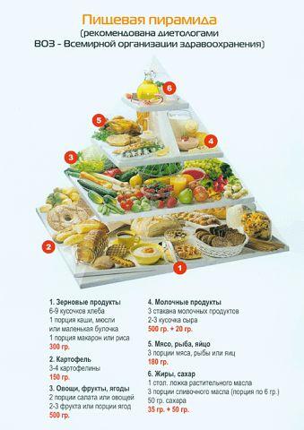 пищевая пирамида (339x480, 30Kb)