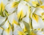 Превью 0012_flower_1280_1024 (700x560, 250Kb)