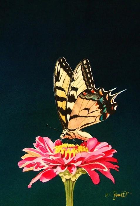 4430707_Butterfly__Friend (477x700, 215Kb)