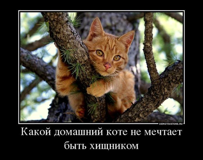 Какой домашний коте не мечтает быть хищником!