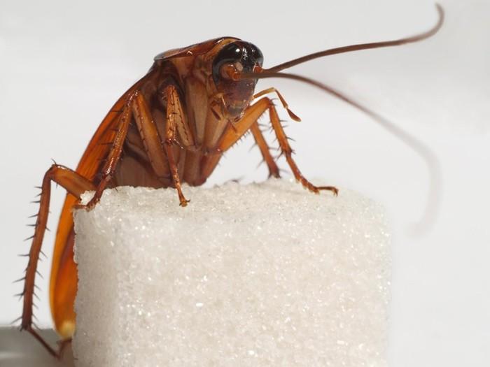 Тараканы поять возвращаются в жилые помещения.