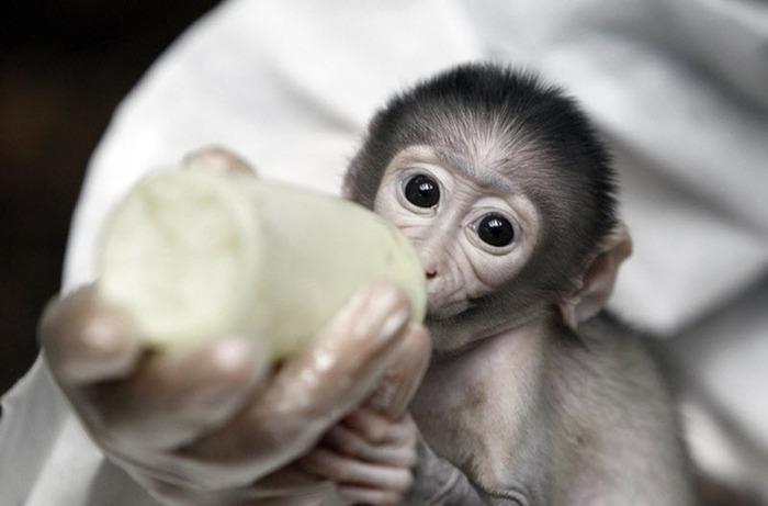 смешная обезьянка фото 2 (700x461, 61Kb)