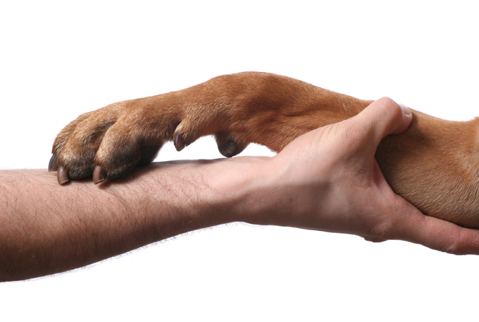 hand-paw (700x470, 201Kb)