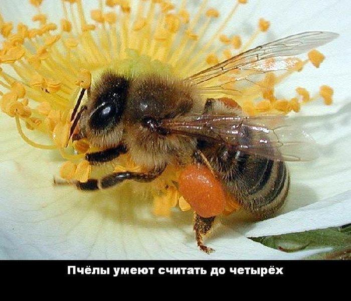 interesnye_fakty_43_foto_37 (700x600, 85Kb)