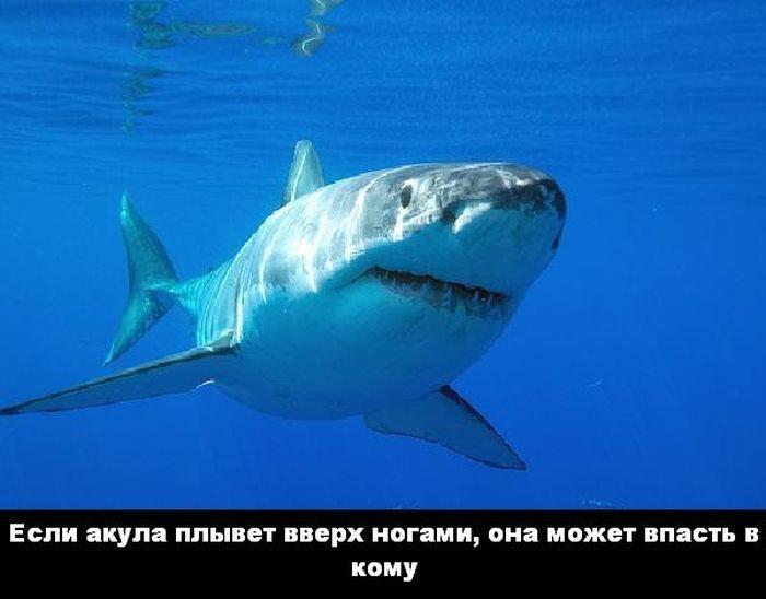 interesnye_fakty_43_foto_40 (700x548, 40Kb)