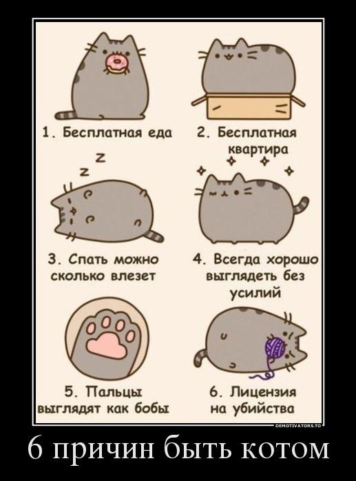 Все-таки котом быть хорошо...