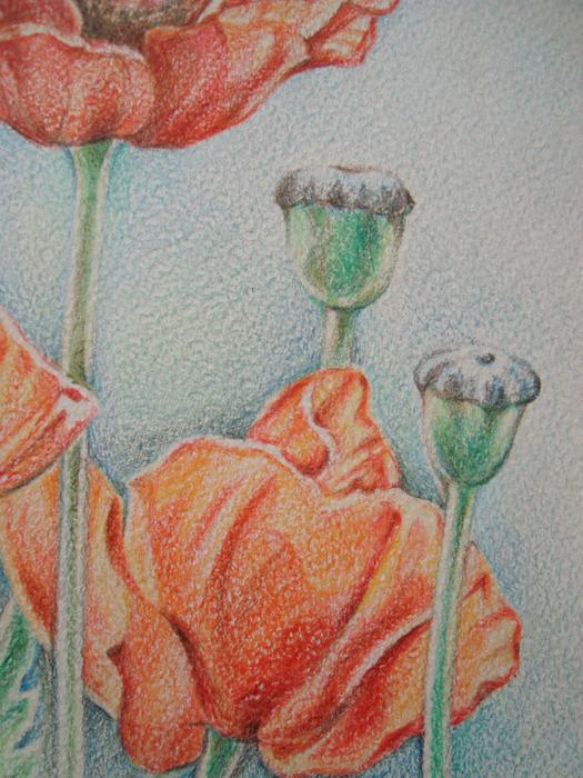 натюрморт цветными карандашами: