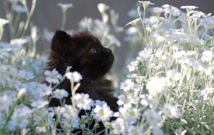 Картинки про природу цветы животные 6