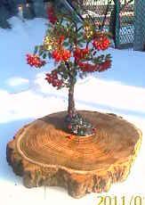 Рябинка-мое второе деревце (163x230, 8Kb)