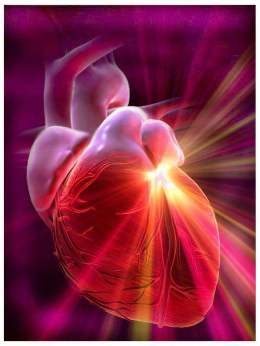 сердце (526x700, 40Kb)