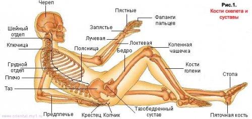 1237822997_skeletside (500x237, 30Kb)
