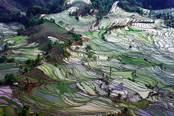 рисовые террасы3 (570x380, 185Kb)