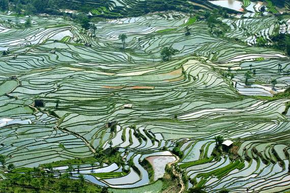 рисовые террасы8 (570x380, 178Kb)