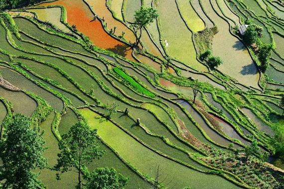 рисовые террасы10 (570x380, 187Kb)