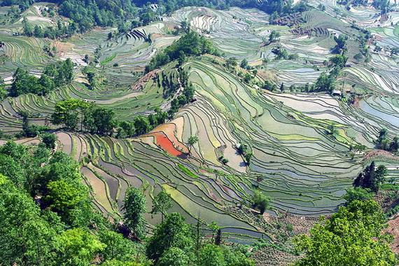 рисовые террасы12 (570x380, 198Kb)