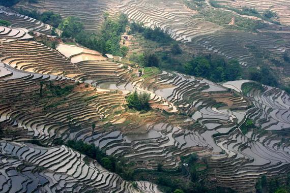 рисовые террасы14 (570x380, 153Kb)