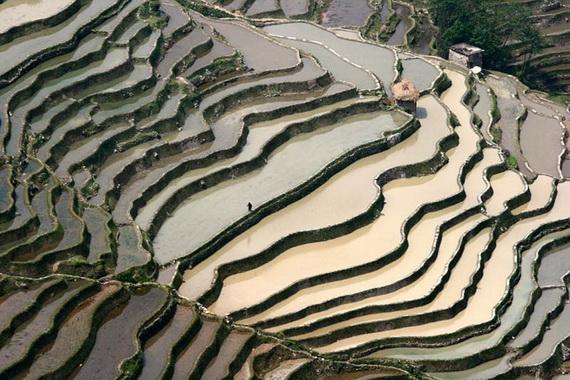 рисовые террасы20 (570x380, 145Kb)