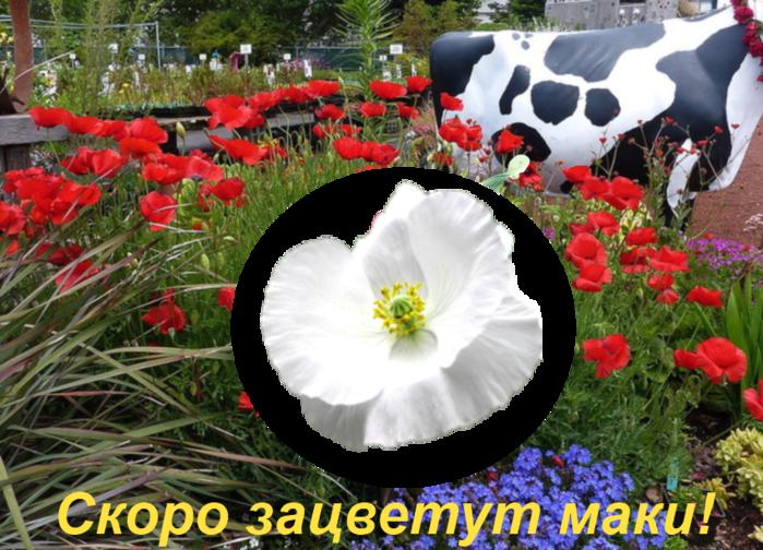 kkk (700x504, 681Kb)