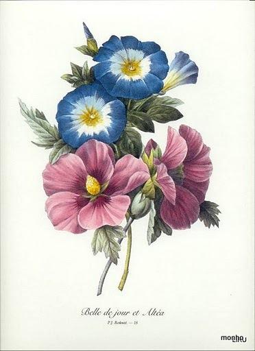 Primulas azuis e amor-perfeito (372x512, 56Kb)