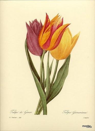 Ramo de tulipas coloridas (372x512, 47Kb)