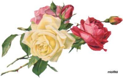 Ramos de rosas coloridas (400x254, 18Kb)