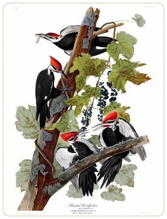 Джон Джеймс Одюбон -- Птицы Америки