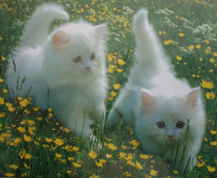 kittens-8371 (700x574, 138Kb)