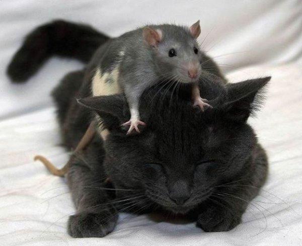кошки мышки/3518263_1190538591_4a858a0a8c187579900c9091eaa009b6 (600x489, 44Kb)