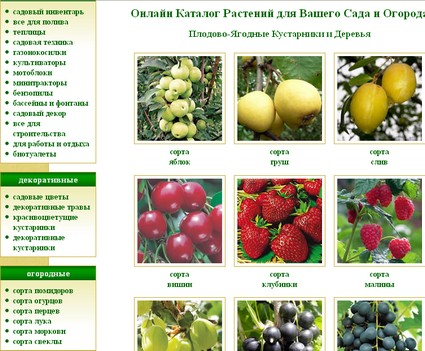 Деревья и кустарники каталог садовых