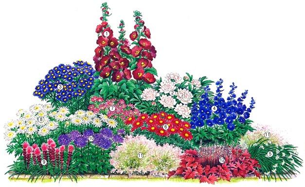 Схема посадки клумбы с лилиями
