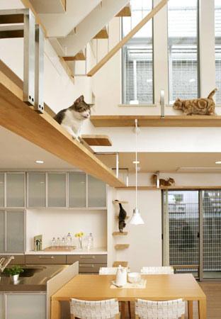 Дизайн интерьера для котов