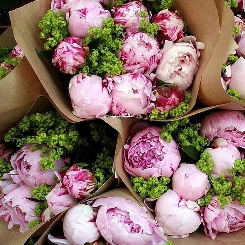 vesennie-cvety-fotografii-vesennih-cvetov-dekor (500x500, 119Kb)