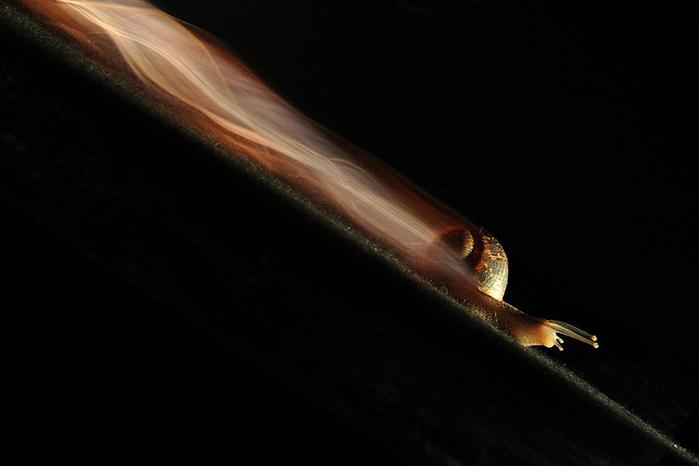 Улитка энерджайзер (700x466, 130Kb)