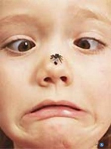 ...и насекомых, укусы которых могут вызвать.