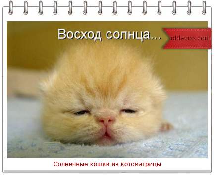 солнечные кошки котоматрицы/3518263_solnce (434x352, 178Kb)